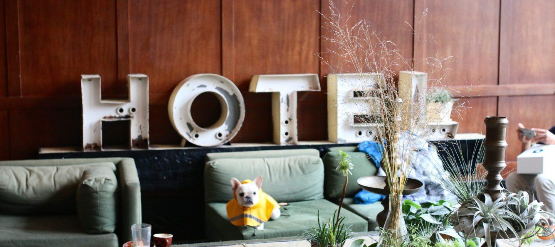 travel-city-city-life-hotel-french-bulldog-portland_t20_oEZEkW